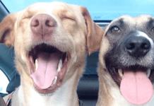 Hondsdolle vakantie