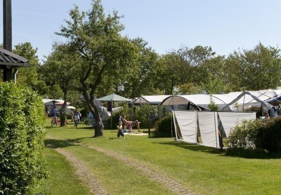Camping Ginsterveld