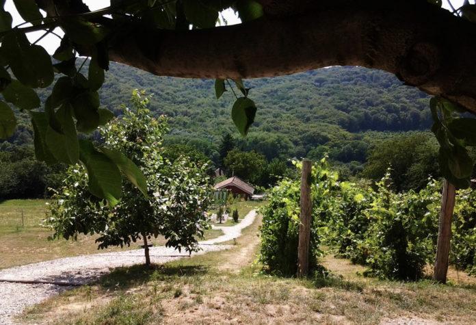 Camping DutchHill voor rust, natuur en eenvoud