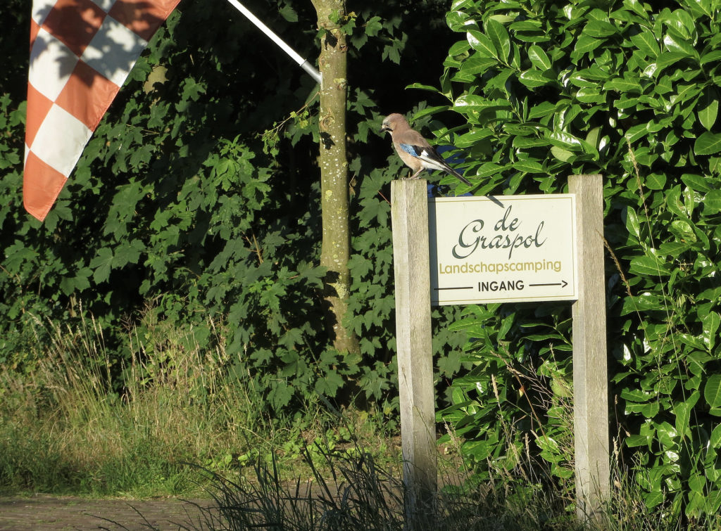 Landschapscamping De Graspol